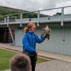 Simon the Lanner Falcon