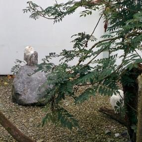 Snowy Owls Lyanna and Rhaegar